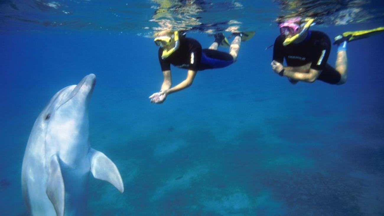 Bay of Islands Adventures